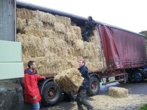 Straw arrival